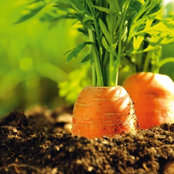 Entre bio et société de conso, quel futur pour l'agro ?