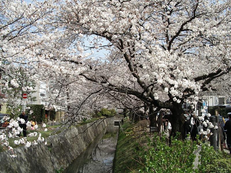 Tokyo et Kyoto, le Japon des extrêmes