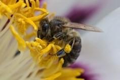 Des ruches et leurs abeilles messagères sur le toit de Toulouse Business School