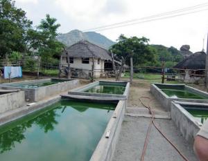 Bassin de culture de spiruline à Gingee à l'ouest de Pondicherry