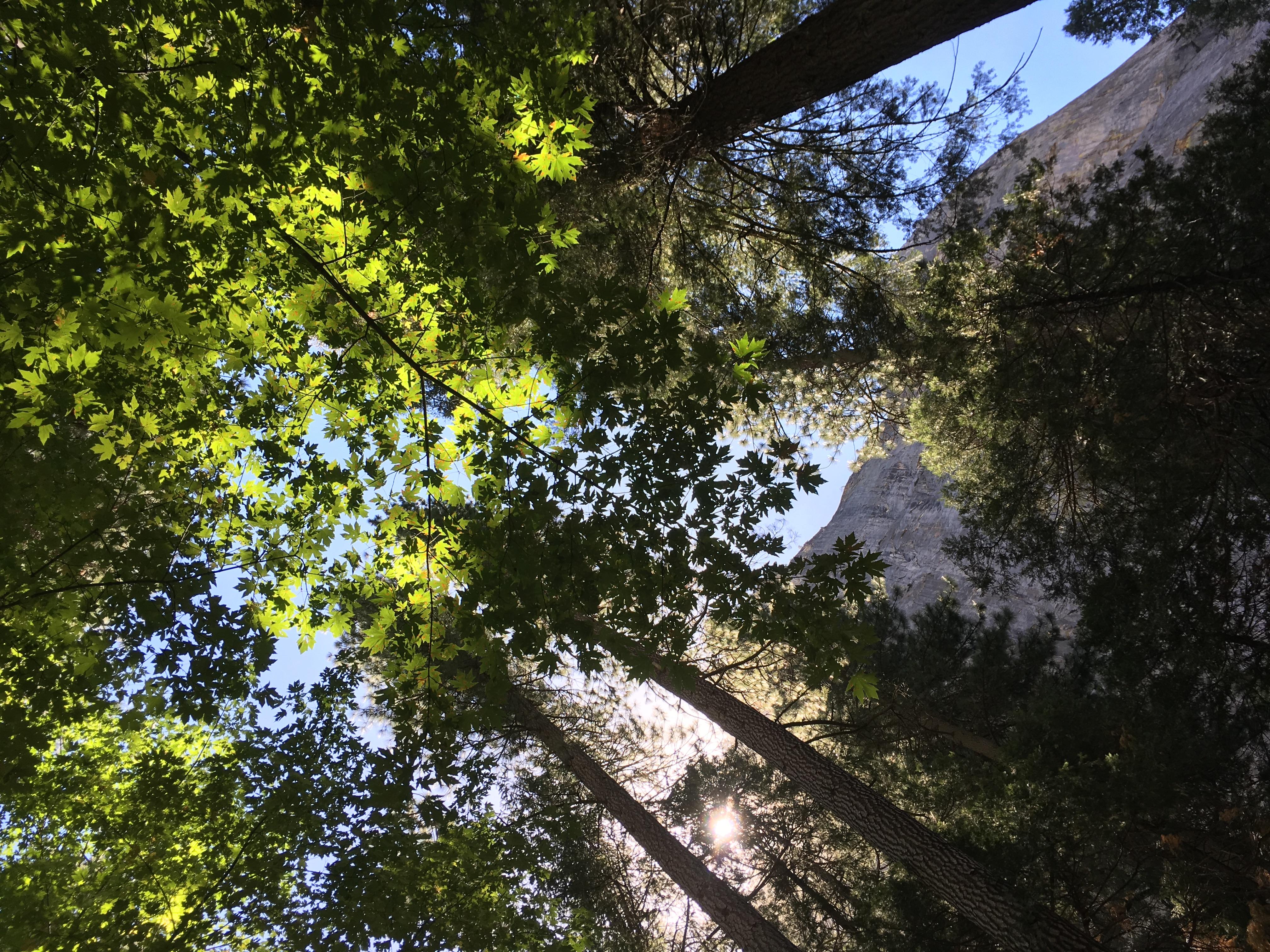 [Episode 18] Yosemite, le premier parc naturel des États-Unis, à l'Est de la Californie