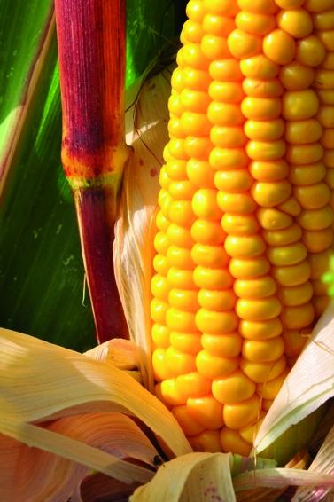 Des flux de recrutements modestes mais stables dans l'agro-alimentaire