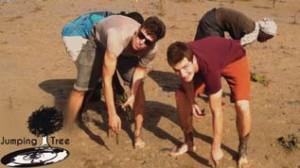 Benoit et Guilhem en train de planter de la mangrove