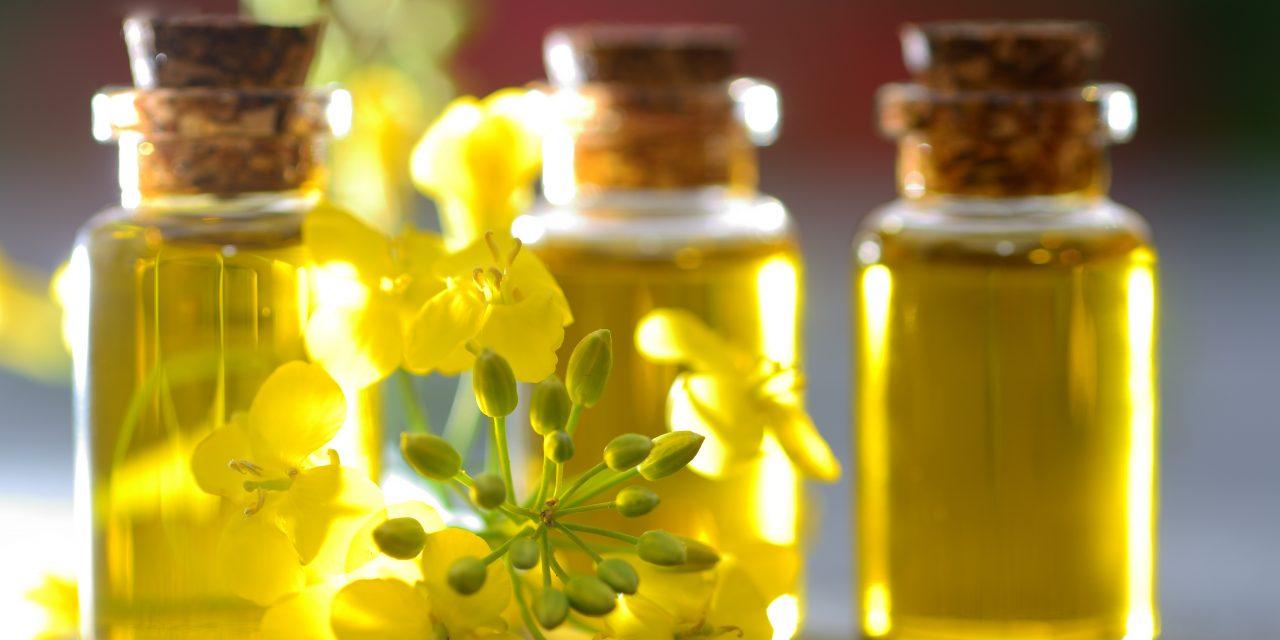Innovez avec l'interprofession des oléo-protéagineux !