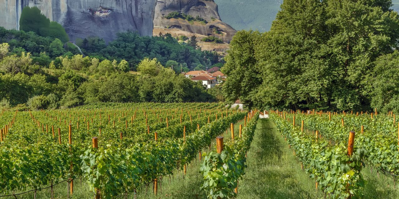 Stratégie export de vins grecs par les  élèves de la School of Wine de BSB