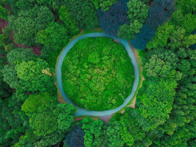 Écologie & ESS : vert, l'eldorado de l'emploi