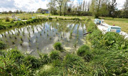 Irstea : la science au cœur de l'environnement