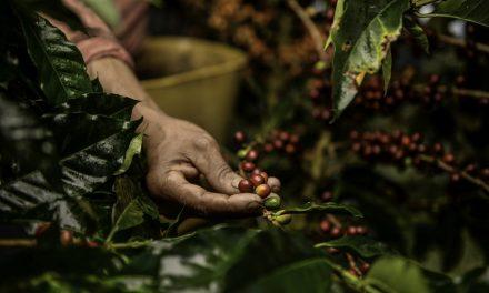 Innovation et RSE, les arômes d'exception de Nespresso