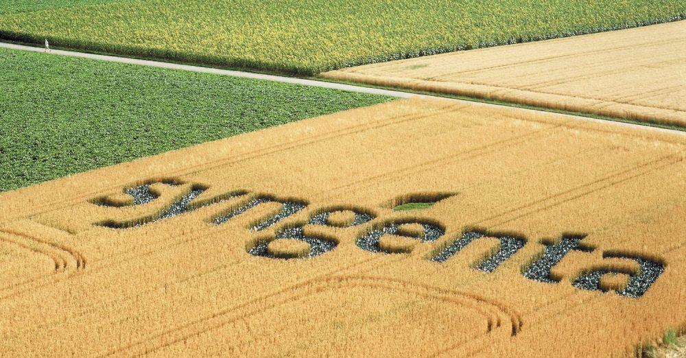 Envie de semer les graines du monde de demain ? Comme Anne Azam, Head of Seeds Business Units – France and South Europe, rejoignez Syngenta.