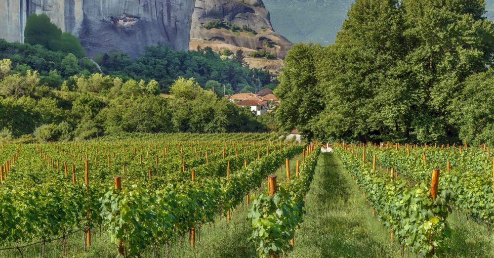 Stratégie export de vins grecs par les élèves de la School of Wine de BSB (c) adobestock, Meteora / Greece
