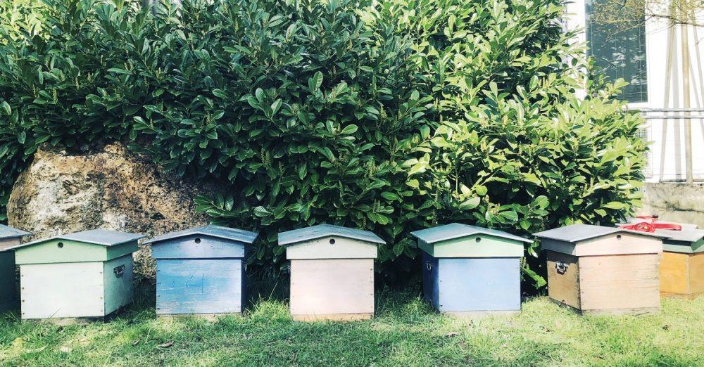 Arrivée de ruches sur le campus (crédit  Université Paris Nanterre - direction Communication - Eva Cochey Cahuzac)