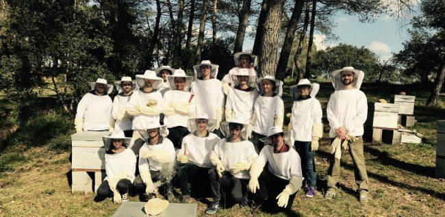Des ruches aux Mines