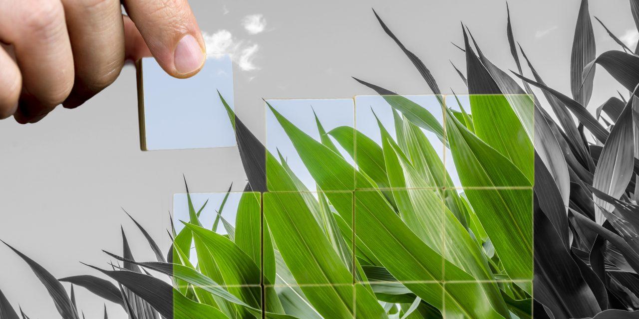 L'ESSEC Business School et CentraleSupélec lancent Gaïa Entrepreneurs, un incubateur pour accompagner les projets liés aux transitions écologiques