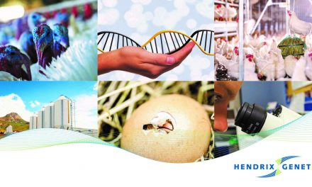Le DAF Hendrix Genetics : un vrai business partner