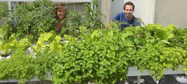 Aéromate invente l'agriculture urbaine du futur sur les toits de Paris