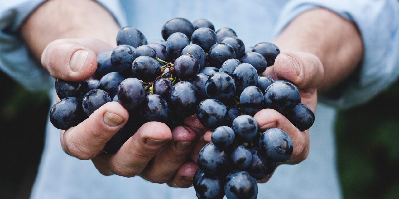 HEC Paris lance son premier programme Summer School dédié au commerce du vin, le Wine Business Program