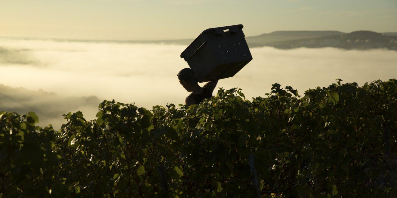 Moët Hennessy en Champagne : une effervescence des talents et des innovations