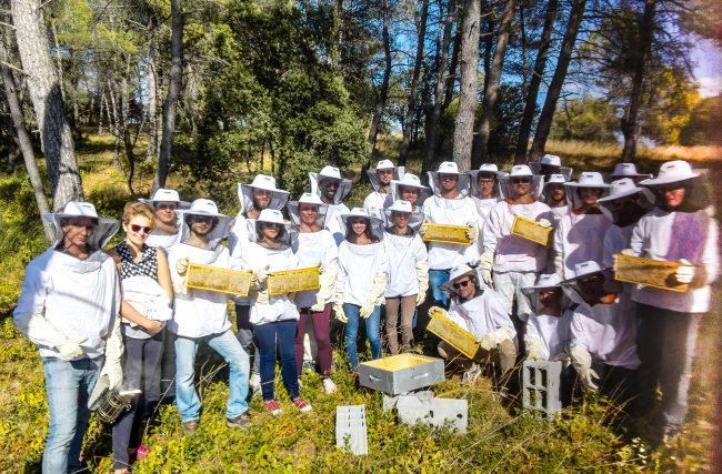 Ecole des Mines d'Alès, étudiants ingénieurs mais aussi apiculteurs !
