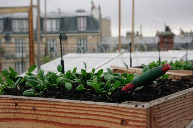AgroParisTech : ses 5 atouts à ne pas rater à la rentrée